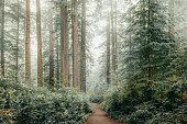 istock Winter in the Sequoias 1292624259