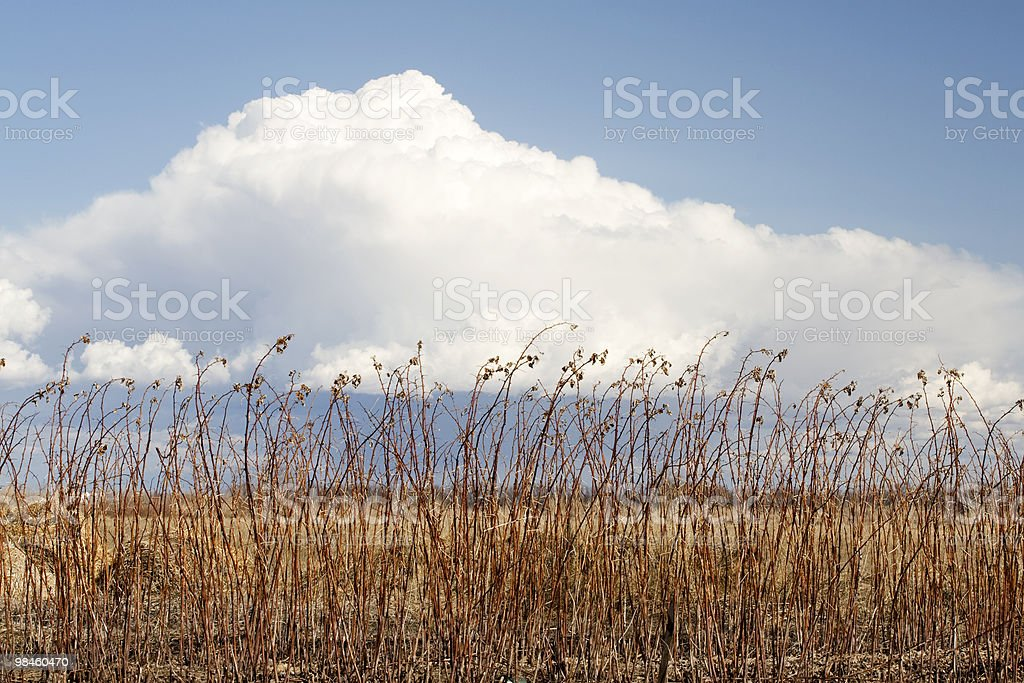 Winter into Spring royalty-free stock photo