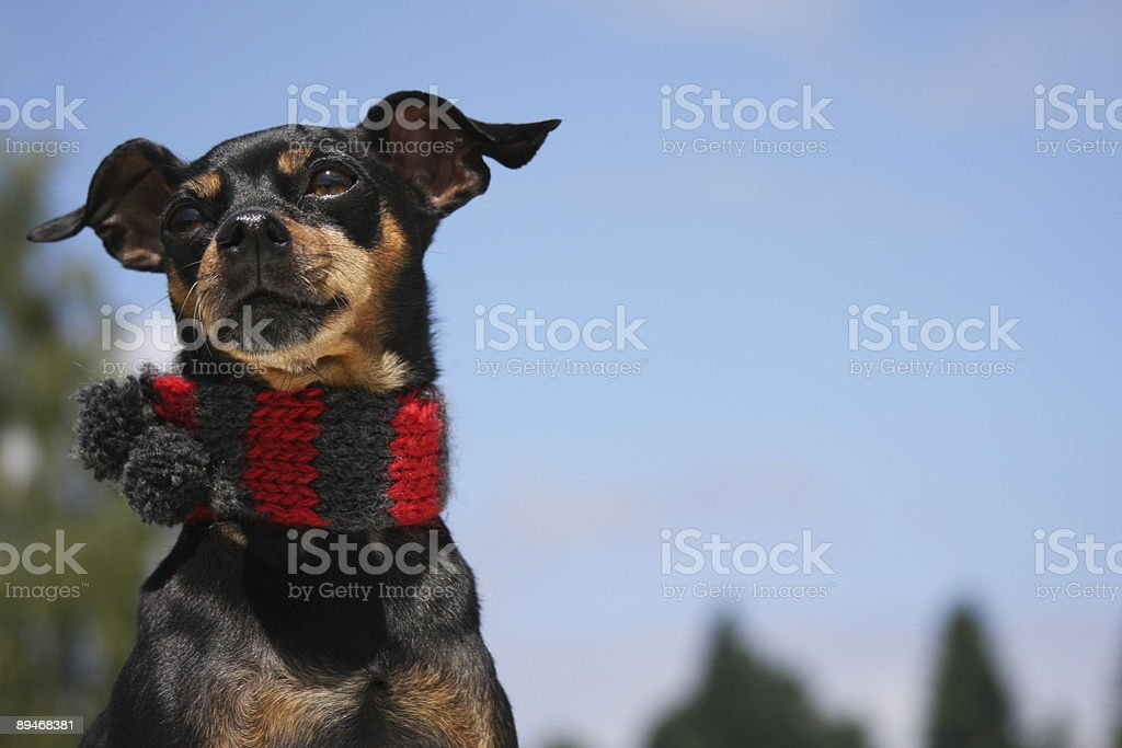 Winter is on its way! royalty-free stock photo