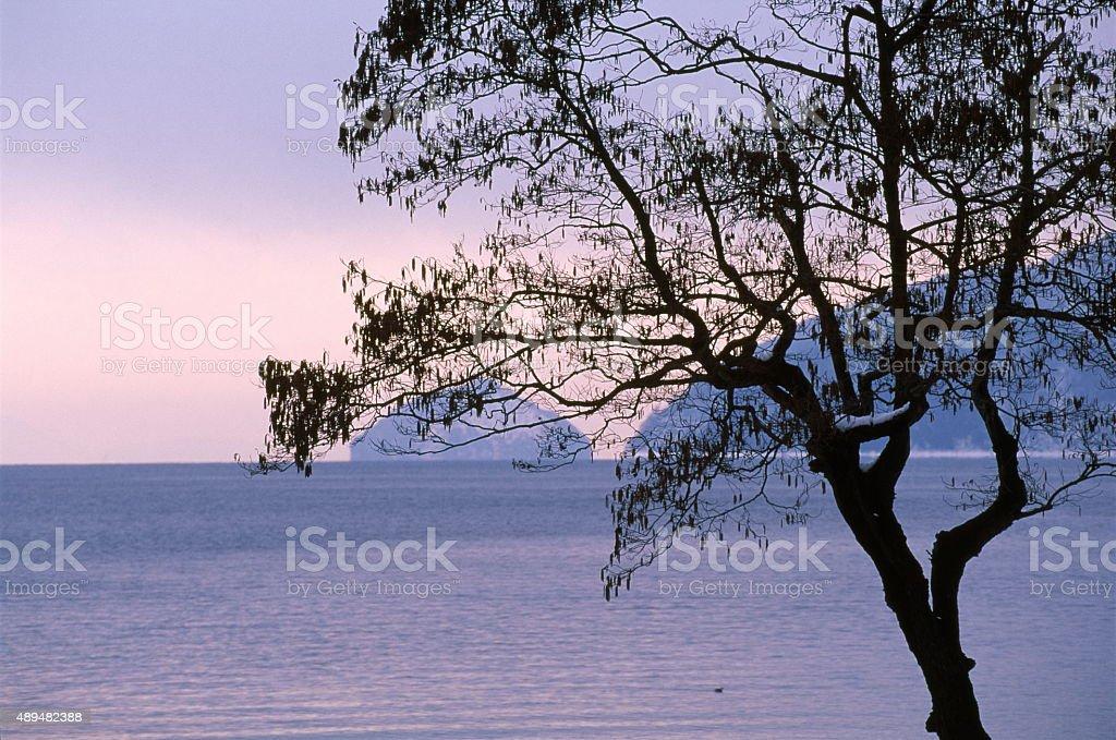 冬の湖 Biwa ストックフォト