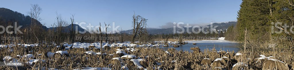 XXL Winter Lake Panorama with old grass royalty-free stock photo