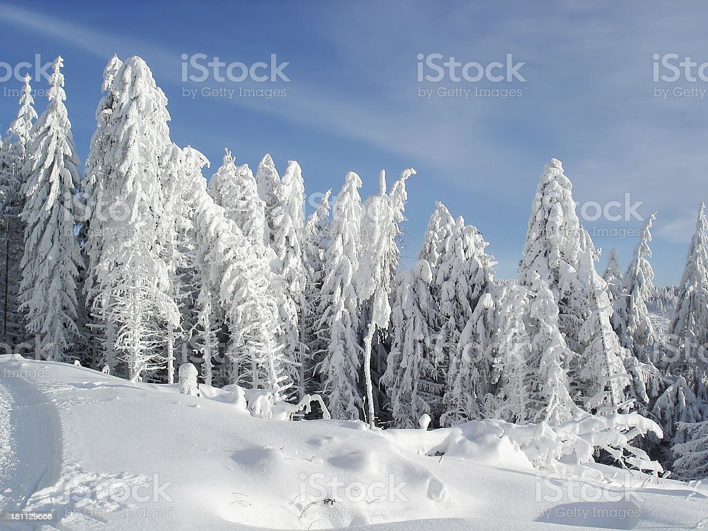 winter landcape with snow and  fir in Black Forest royalty-free stock photo