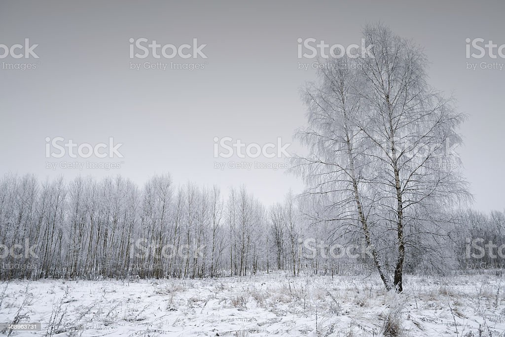Winter Landscape - 36 Mpx royalty-free stock photo
