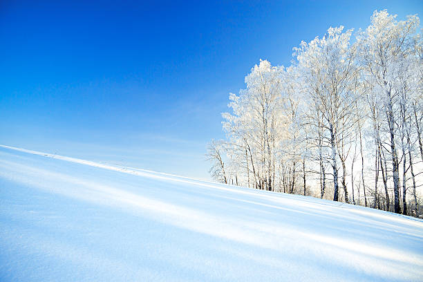 Paisagem de inverno de campo e da floresta - foto de acervo