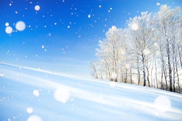 paisagem do inverno um com o céu azul, um campo e a floresta - foto de acervo