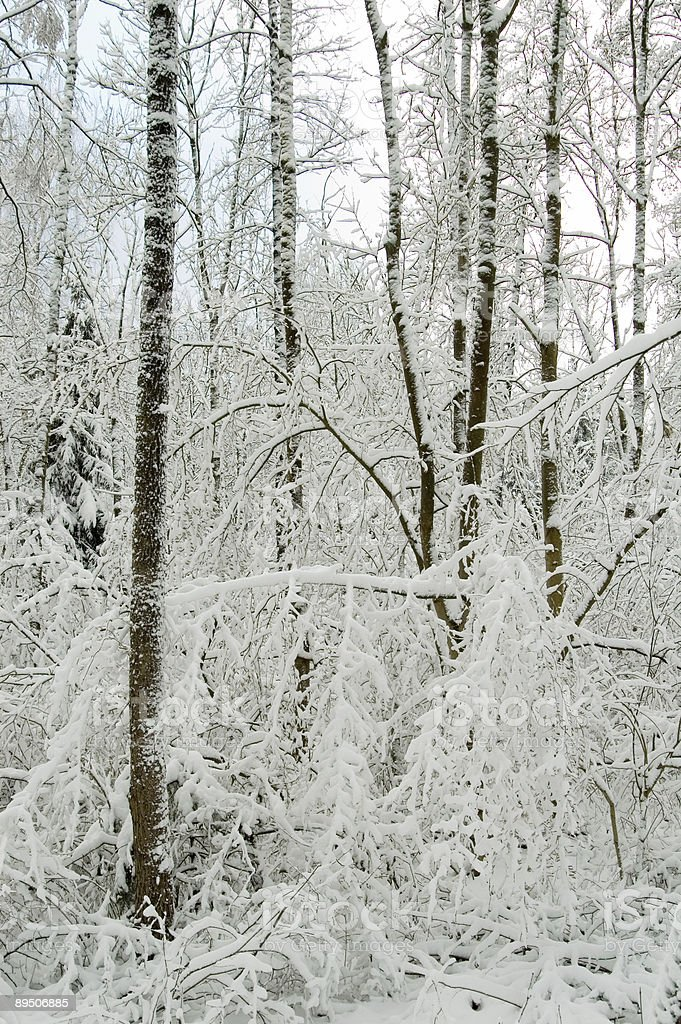 Winter landscape after snow storm royalty-free stock photo