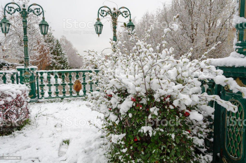 Usine de paysage et firehorn hiver - Photo