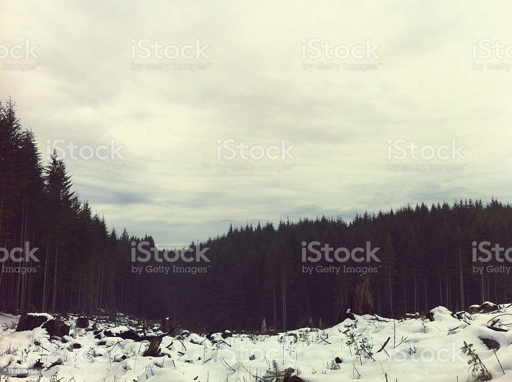 Winter landscape and Tree Clear Cut royalty-free stock photo