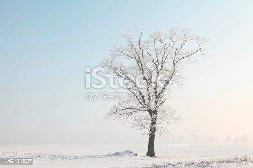 1034754000 istock photo Winter landscape at dawn 149131807