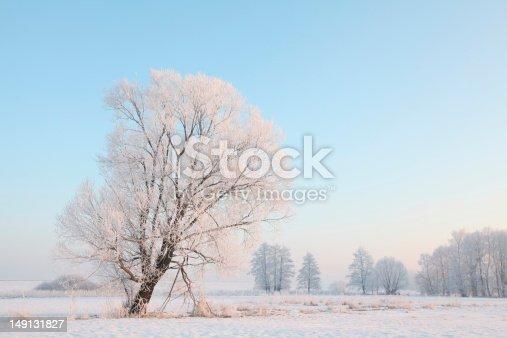 1034754000 istock photo Winter landscape at dawn 149131827
