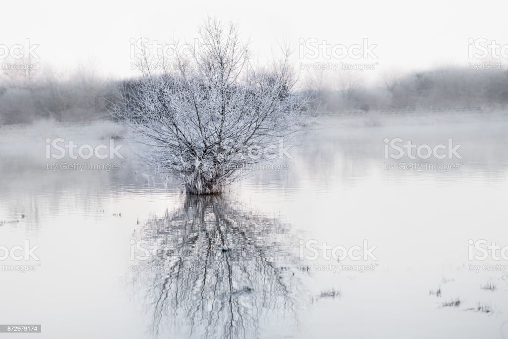 Winter landscape at lake with tree and fog stock photo