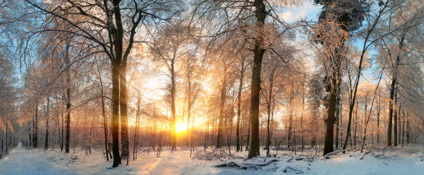 Winter landscape at sunset in a forest stock photo