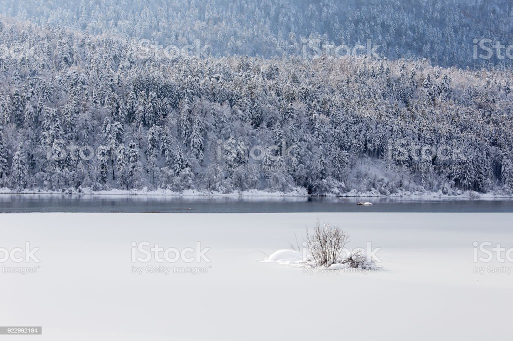 Winter landscape background with snowy lake, little bush and snowy spruce trees, Cerknica lake, Slovenia stock photo