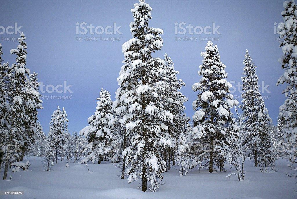 Winter Landscape Finland royalty-free stock photo
