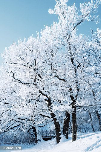 Winter landscape, forest trees covered with frost and snow in sunny winter day, winter forest landscape