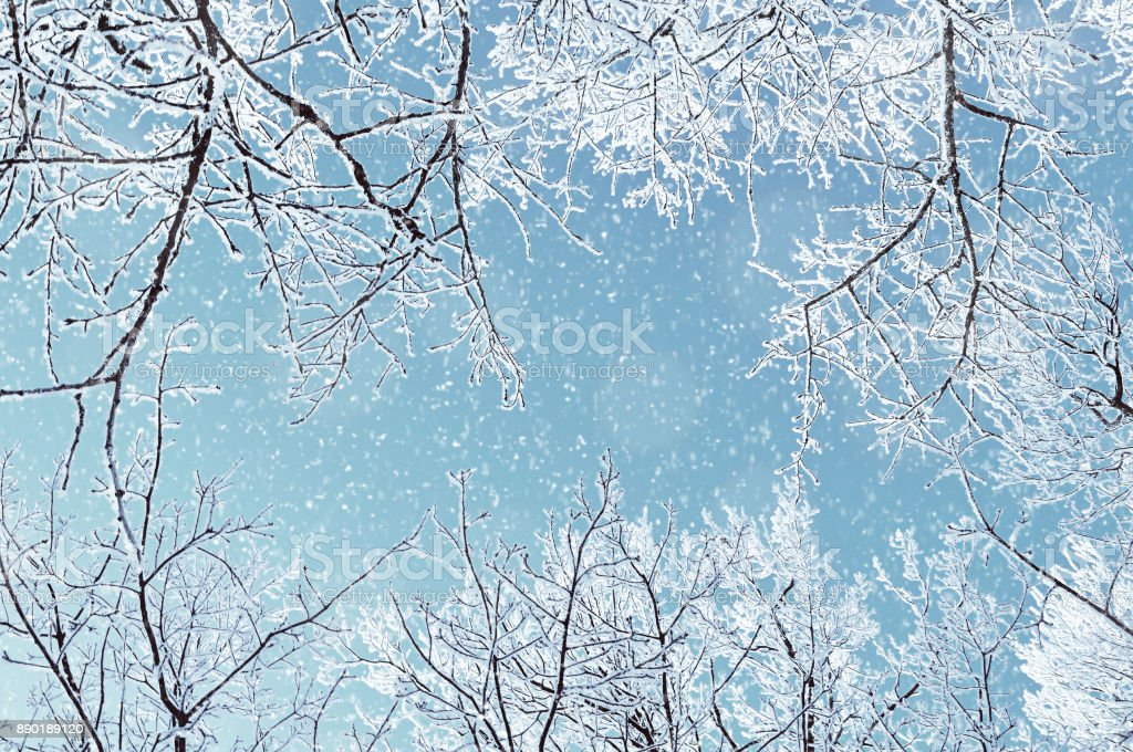 Winter landscape - frosty branches of the winter trees stock photo