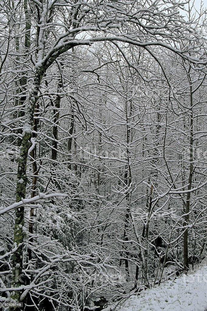 Winter Landscape, Great Smoky Mtns NP, TN royalty-free stock photo