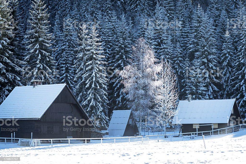 Winter Landscape in Pokljuka Slovenia Europe royalty-free stock photo