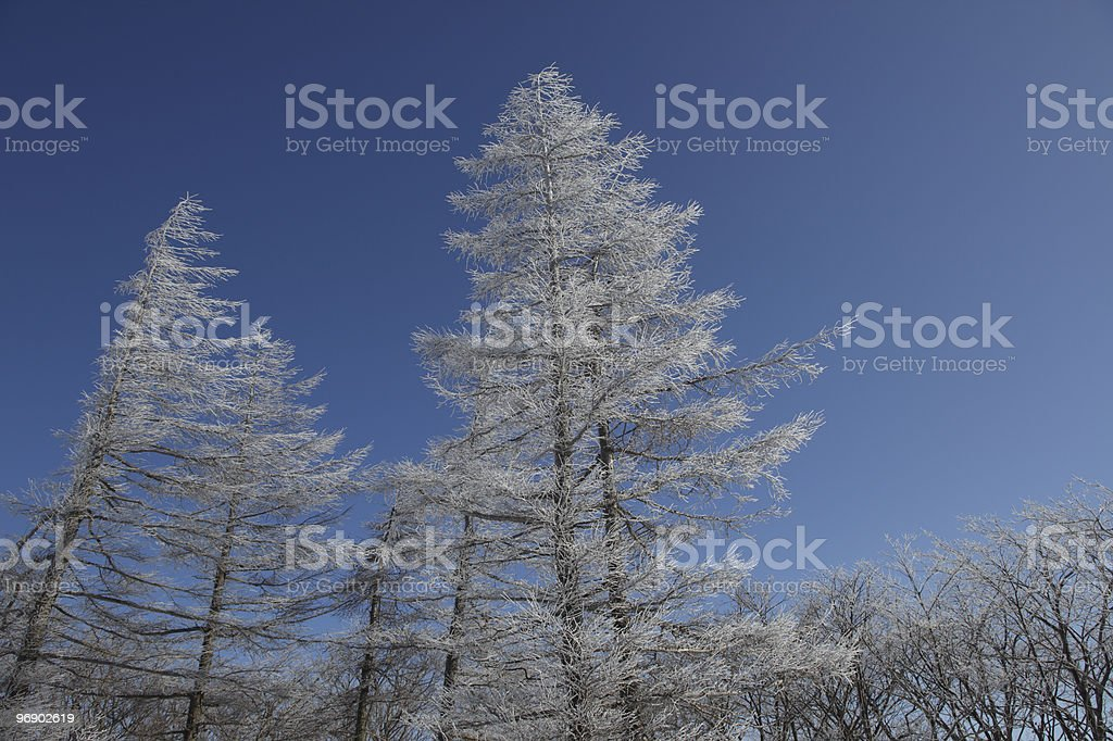 Winter landscape in Pyeongchang, Gangwon Province in South Korea. royalty-free stock photo