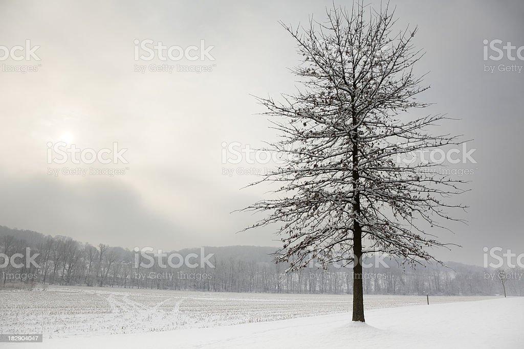 Winter Landscape in Rural Area Following Newly Fallen Snow stock photo