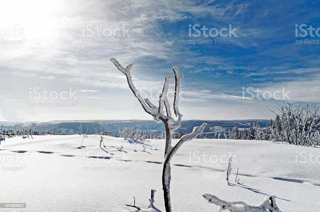 Winter landscape in the Black Forest National Park with backlight stock photo