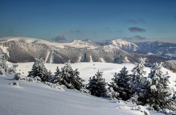 소나무와 velka fatra 범위에서 겨울 풍경 나무 슬로바키아 - 벨리카 파트라 뉴스 사진 이미지