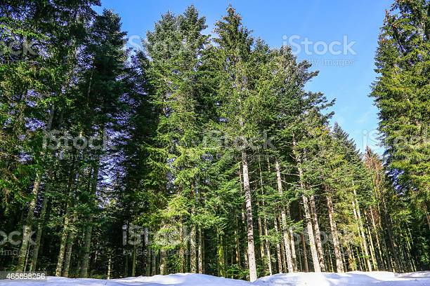 Photo of Winter landscape of Forest in Vosges mountain, France