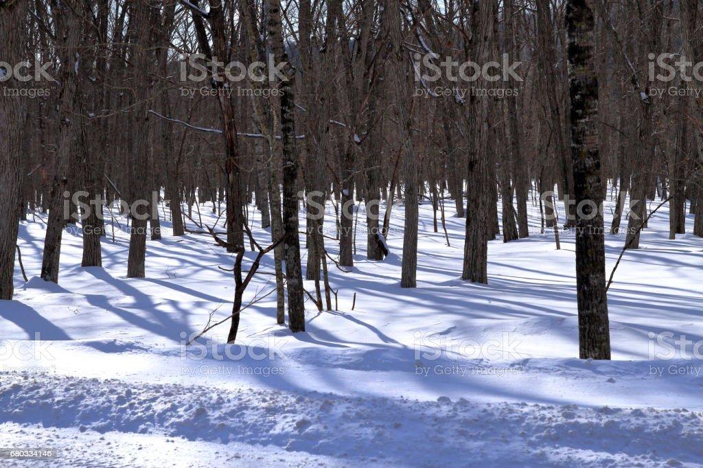 Winter landscape of Hokkaido royalty-free stock photo