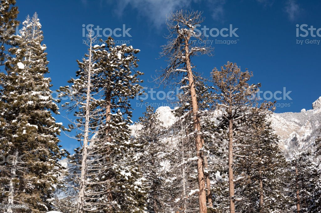 Winter landscape of pine trees up on the mountain stock photo