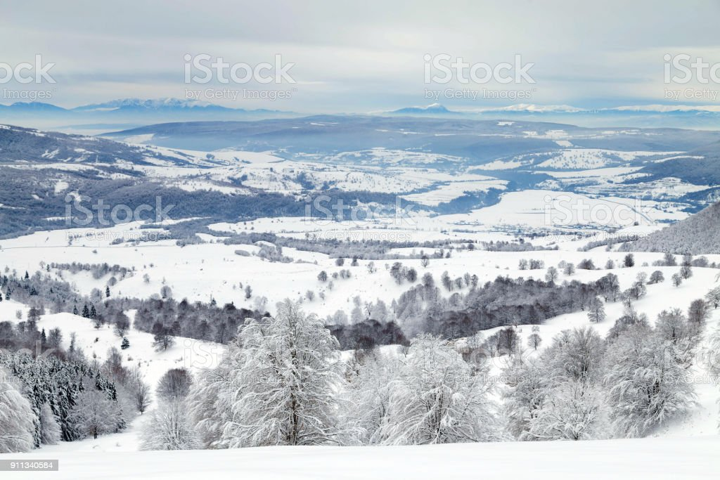 Winter landscape of the frosty forest stock photo