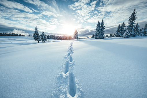 Idyllic winter scene with footpath in the snow.