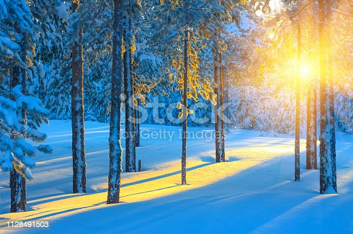 Colorful sunset in the beautiful snow-covered coniferous forest.