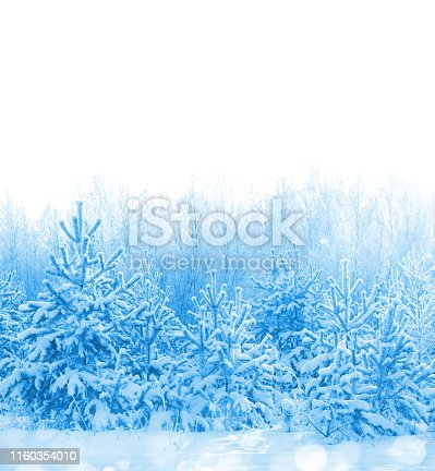 Forest covered with snow isolated on white background