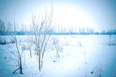 winter landscape of rural field with snow