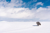 A single tree in snowy winter. Winter landscape with alone tree - cold winter day