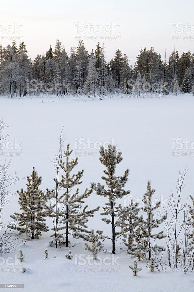 Winter landscape. royalty-free stock photo