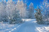 beautiful winter landscape with the forest and the blue sky