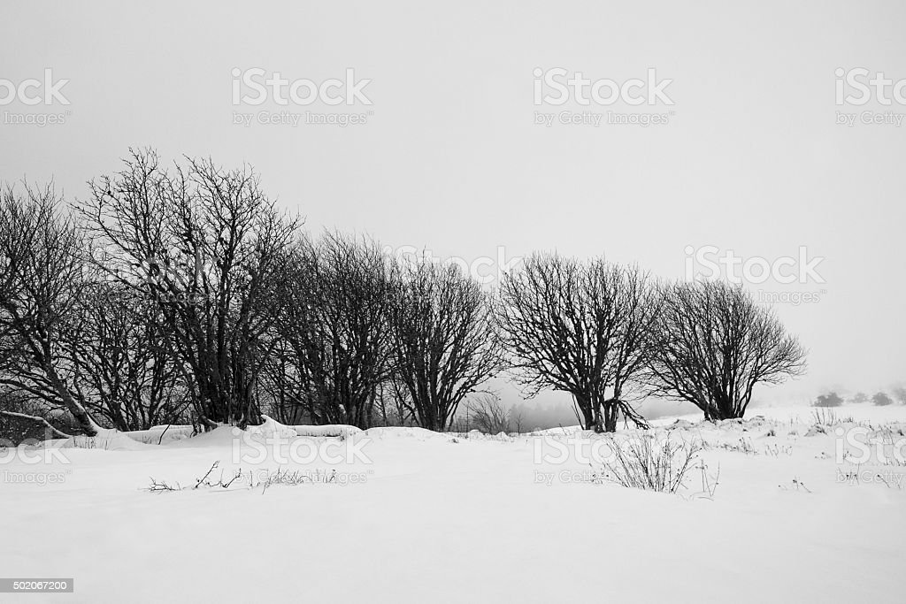 Paysage hivernal stock photo