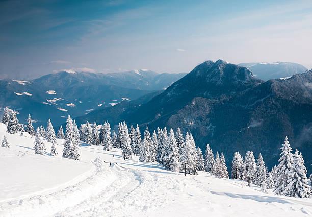 winter landscape - snötäckt bildbanksfoton och bilder