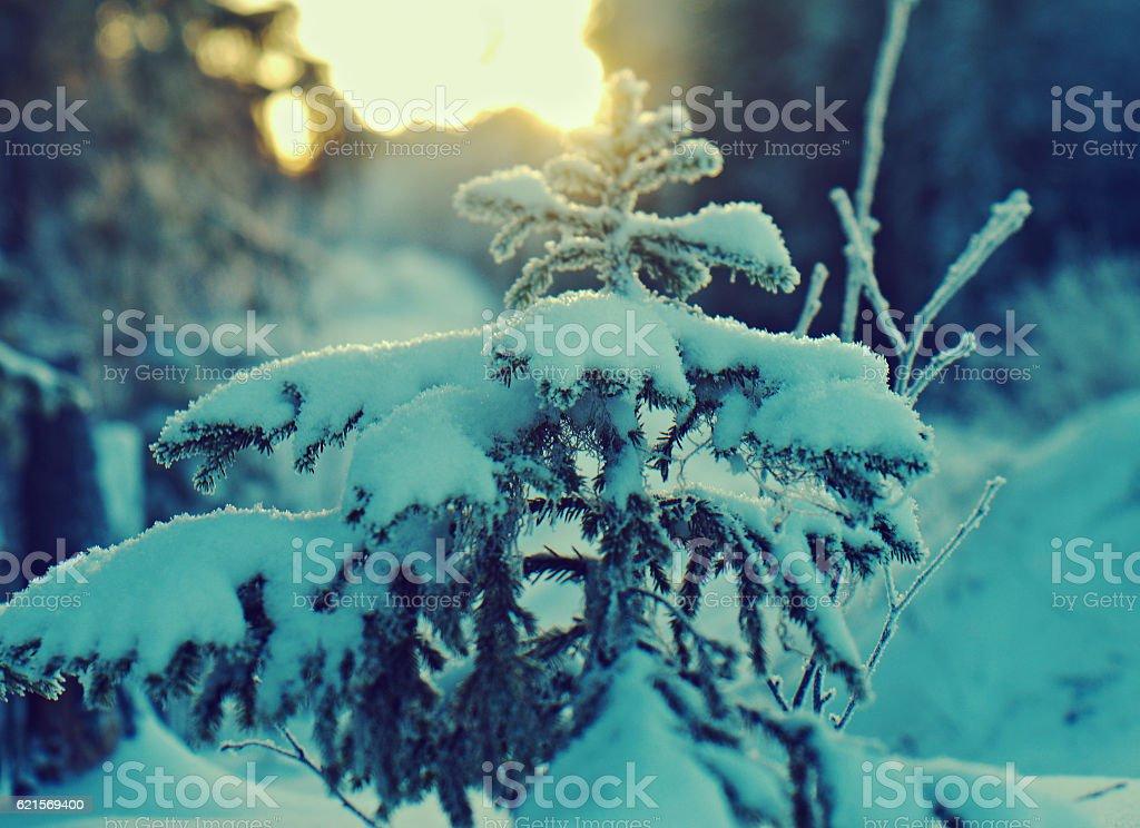 Paysage d'hiver. photo libre de droits