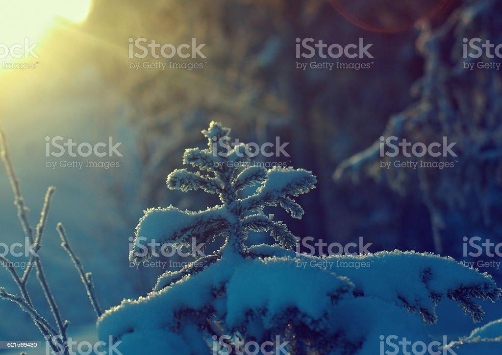 Winter Landschaft.   Lizenzfreies stock-foto