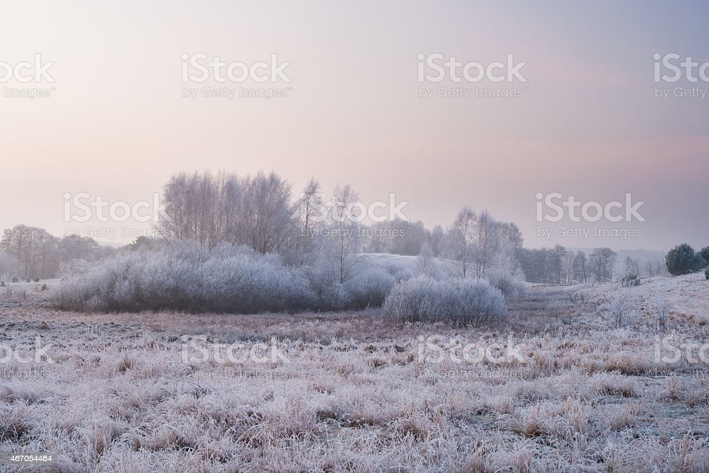 Winter landscape. rime on trees and plants stock photo