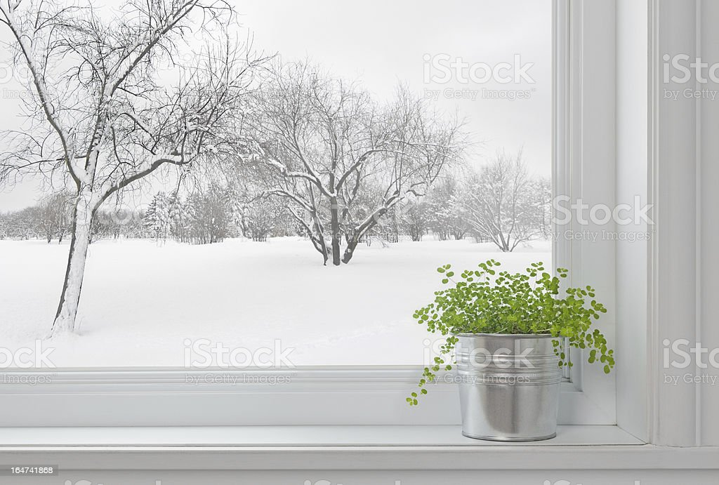 Winter landscape seen through the window, and green plant stock photo