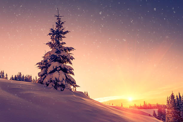 Winter landscape. Snow-covered conifer trees and snowflakes at sunrise. – Foto