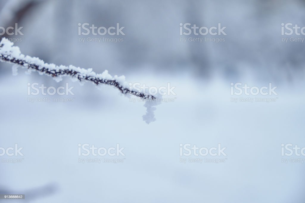 Winter landscape. Trees covered with snow, cold weather. Snow-covered...