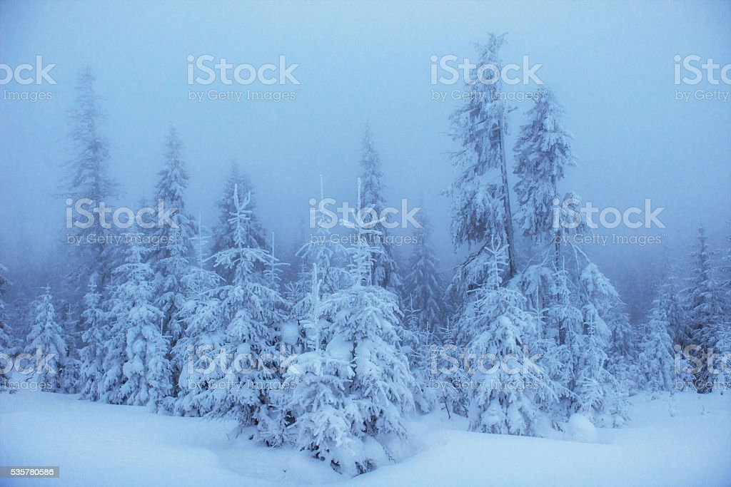 winter landscape trees in frost and fog stock photo