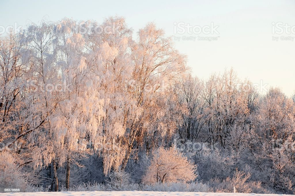 Winter landscape. White hoarfrost on trees. royalty-free stock photo