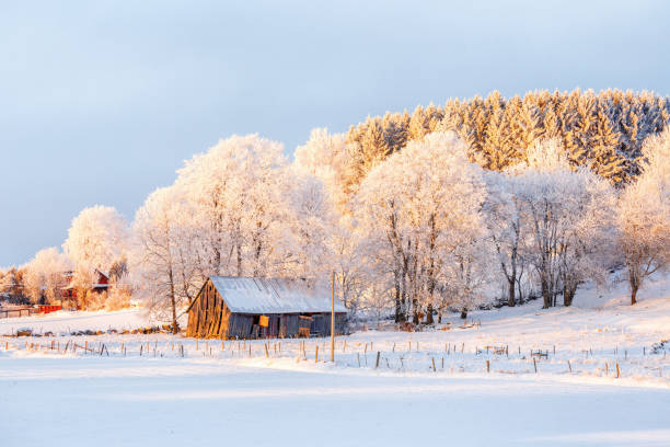 Winter landscape with an old barn at sunset stock photo
