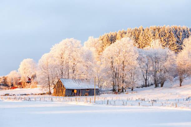 Paisagem do inverno com um velho celeiro ao pôr do sol - foto de acervo