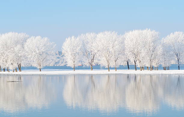 winter landscape with beautiful reflection in the water - januari bildbanksfoton och bilder